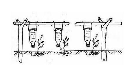 Самодельная система капельного полива