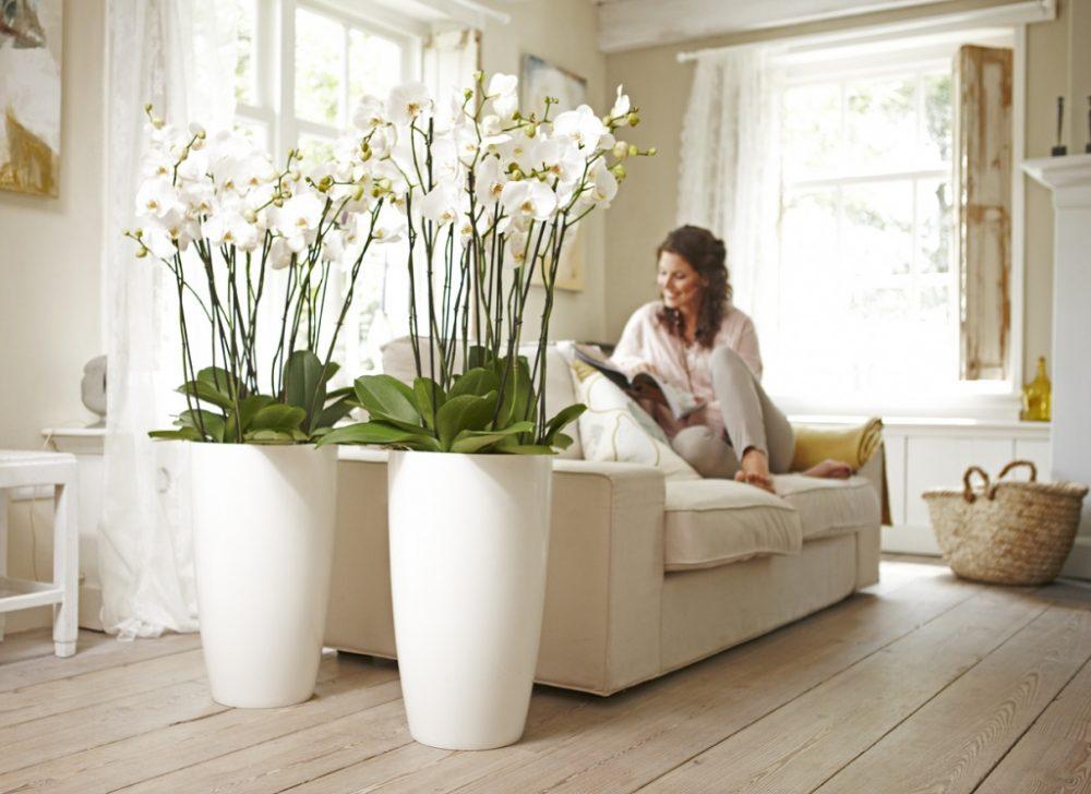 Цветы для светлой спальной комнаты