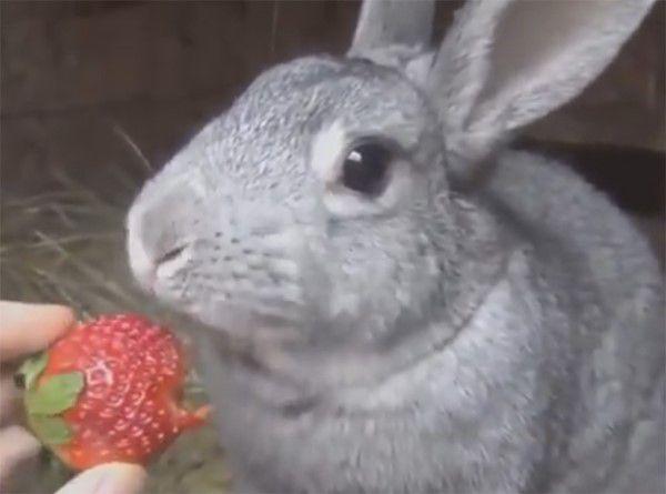 У содержания кроликов в вольере есть масса плюсов
