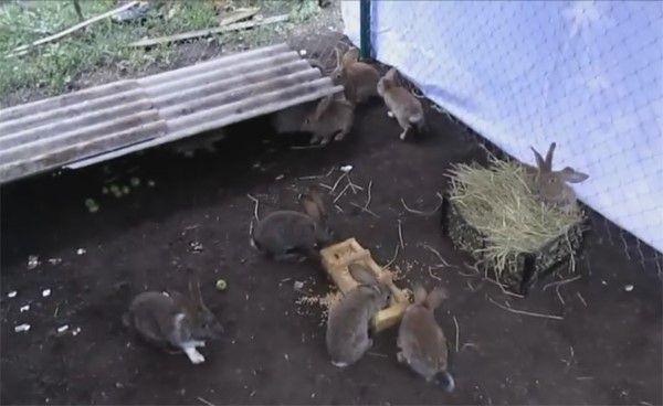 Поставьте домики для кроликов