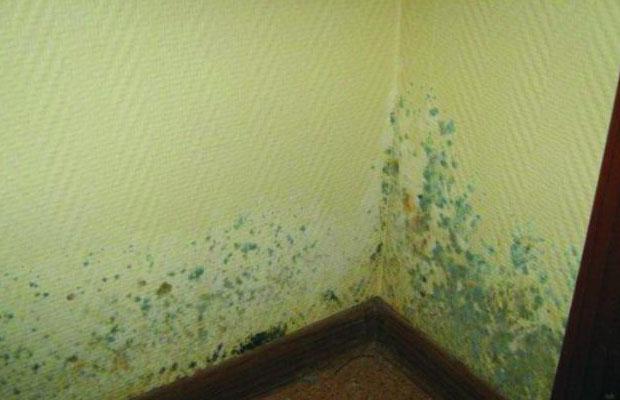 Зеленая плесень может вызывать аллергию