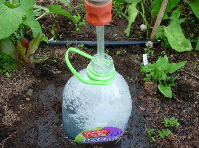 Капельный полив закопанная бутылка