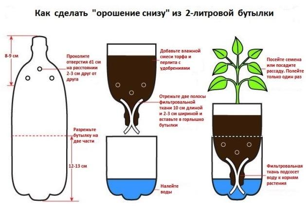 Орошение снизу при помощи 2-литровой пластиковой бутылки