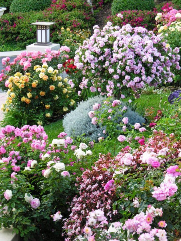 rms-spacklemuddpalin_rose-garden_s3x4-jpg-rend-hgtvcom-966-1288