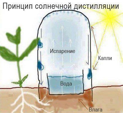 Сбор атмосферной влаги для полива