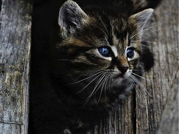 Зимний дом для кошек