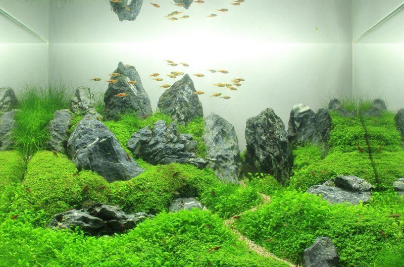 Декорирование домашнего аквариума в тайваньском стиле