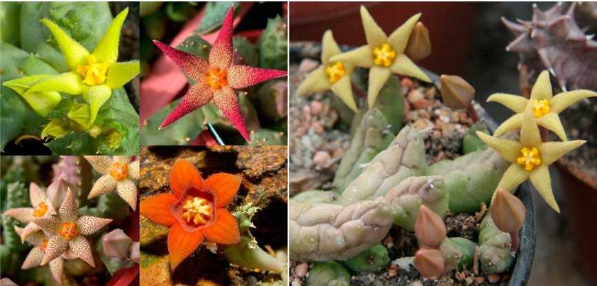 Необычные яркие цветы и странные стебли