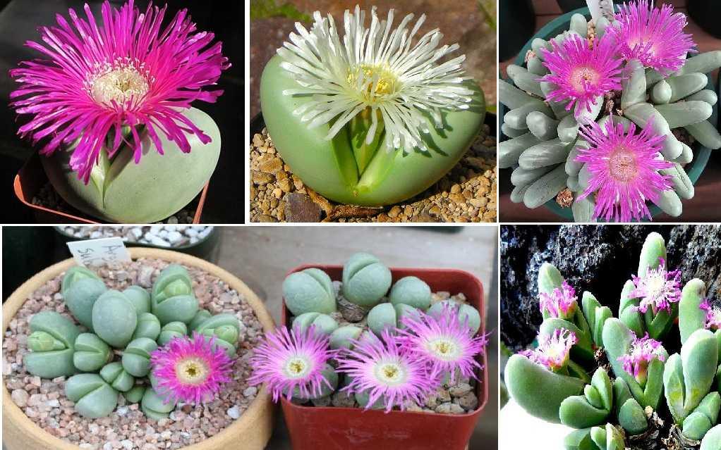 Цветущие камни - интересное дополнение для сада в стекле