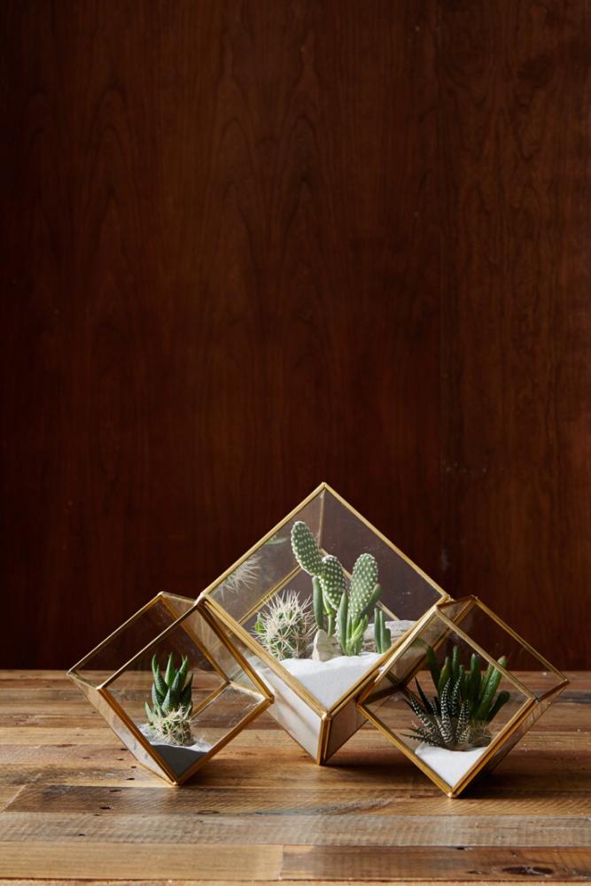 На первый взгляд достаточно простые флорариумы, которые очень эффектно выглядят в интерьере