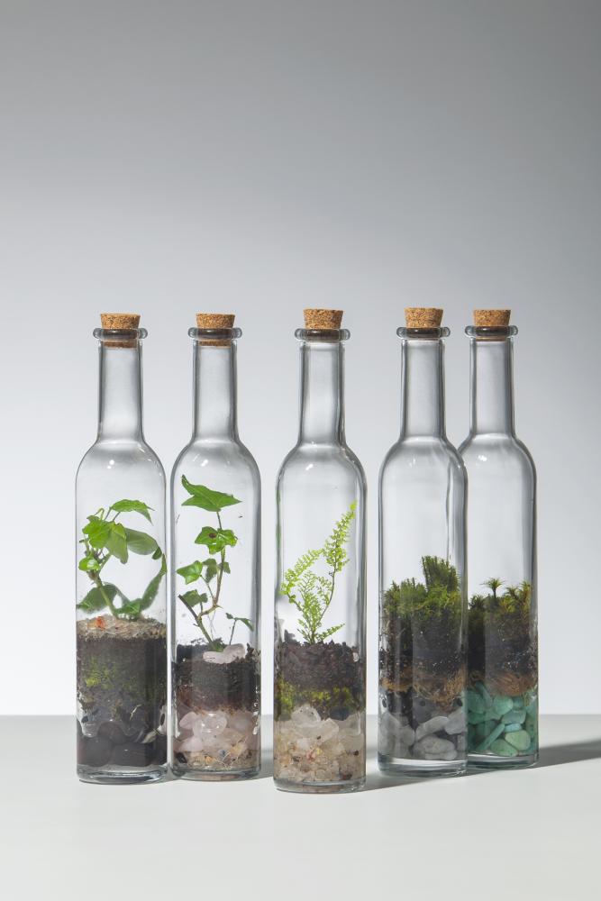 Очень красиво выглядят композиции флорариумов в прозрачных стеклянных бутылках