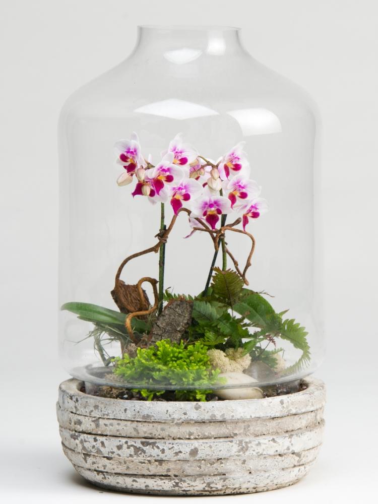 Комбинированный флорариум в виде стеклянного купола с деревянной основой дна