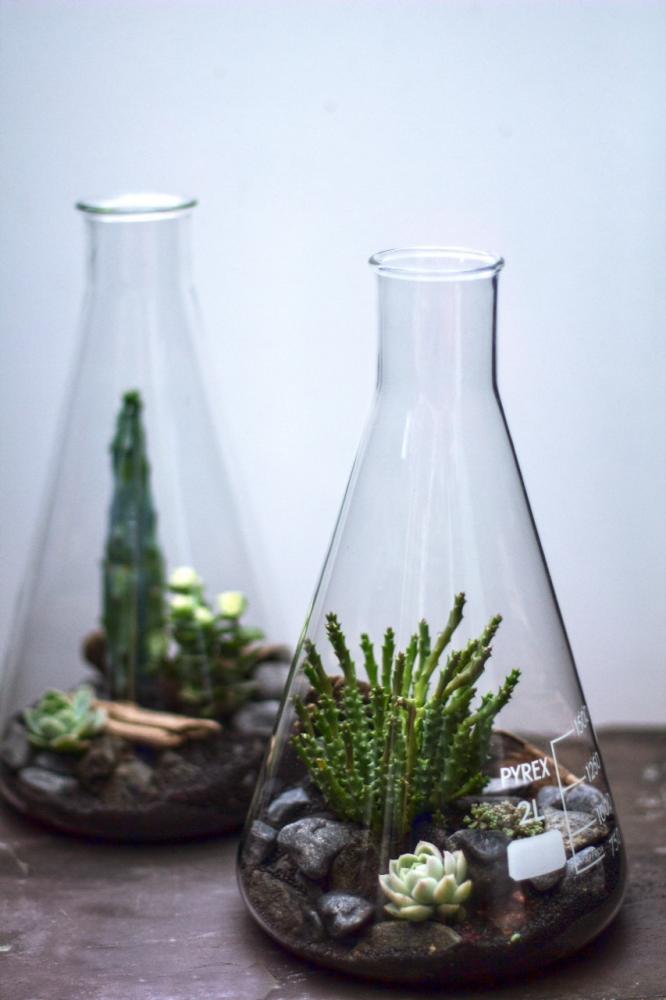 Флорариумы своими руками с композициями из суккулентов в колбах для химических реактивов