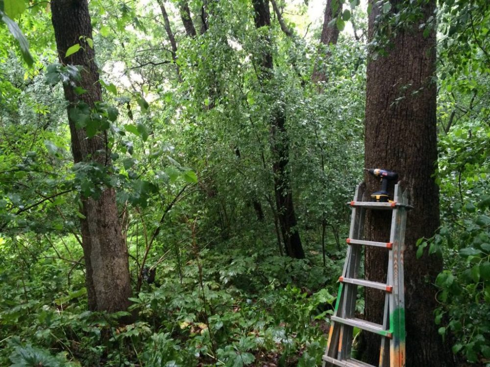 Готовим деревья