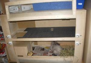 Клетка для кролика в квартире