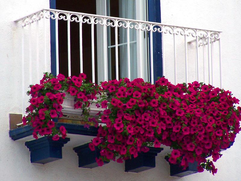Интересным дизайнерским решением станут цветы на балконе, ведь кованые изделия отлично сочетаются с живыми растениями, а цветы на балконе - способны не только радовать глаз владельцев, но и ограждать от уличного шума, пыли и вредных выхлопов
