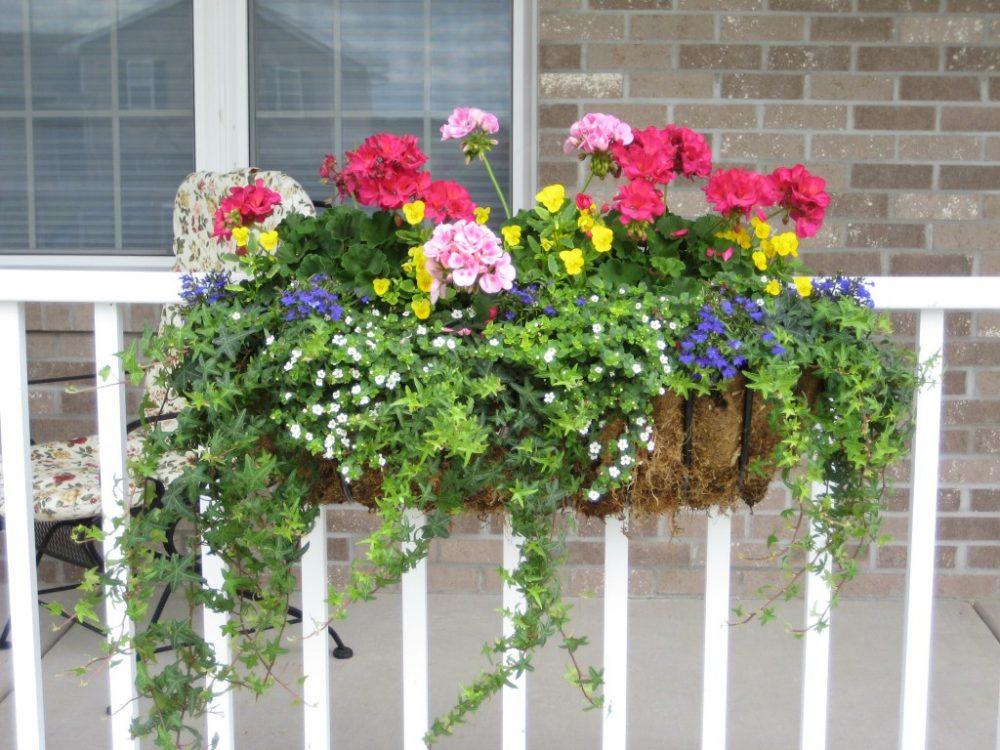шикарные цветы на балконе на этажерках пример