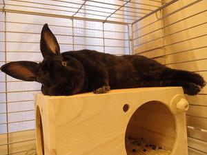 Кролик в клетке для проживания