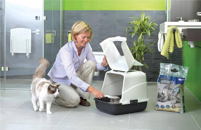 Человек показывает кошке туалет