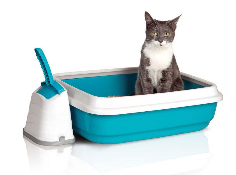 Кот в лотке с высокими бортиками