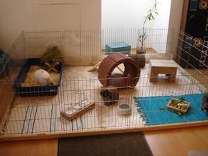 Место для клеткис кроликом