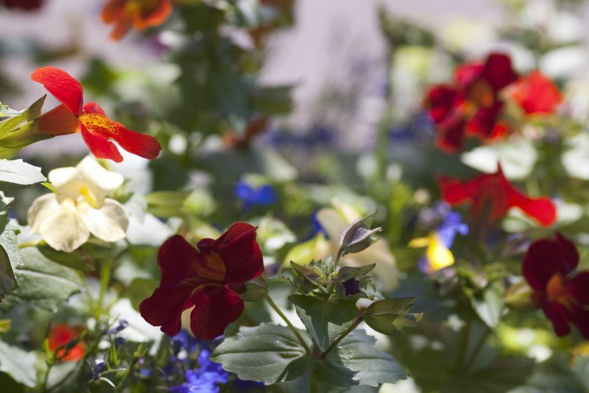 flowers in a cottage garden flower bed