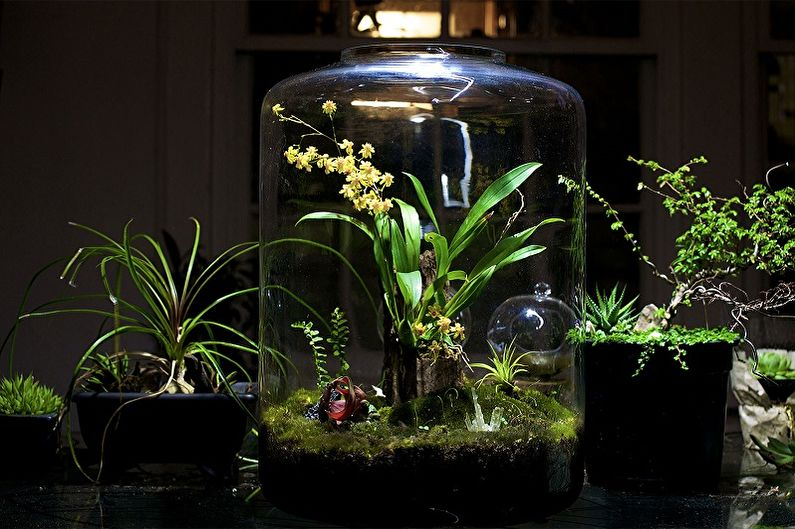 Флорариум своими руками - Тропический лес