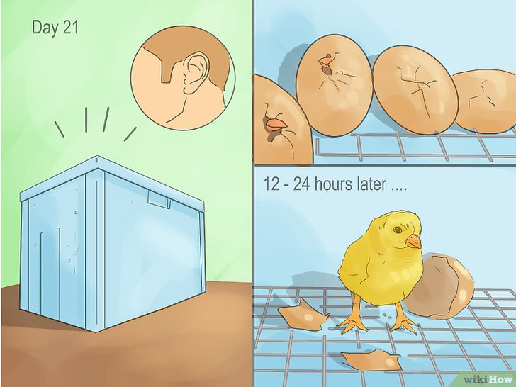Изображение с названием Make a Simple Homemade Incubator for Chicks Step 11
