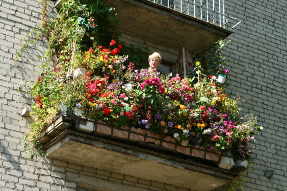 яркие цветы на балконе на этажерках интерьер