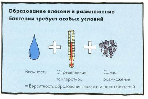 условия для образования грибка