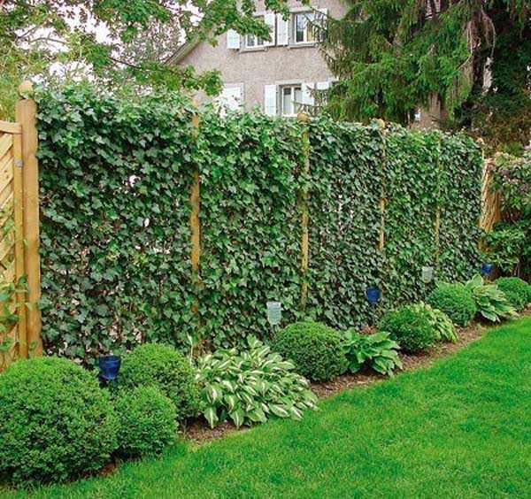Самый естественный способ - посадить растения